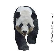 Giant Panda Bear - Digital Painting of Giant Panda Bear ...