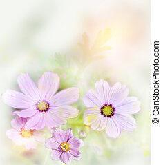 Cosmos Flowers - Digital Painting Of Purple Cosmos...