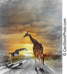 Two Giraffes - Digital Painting Of Two Giraffes Walking On...