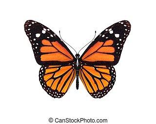 digital render of a monarch butterfly