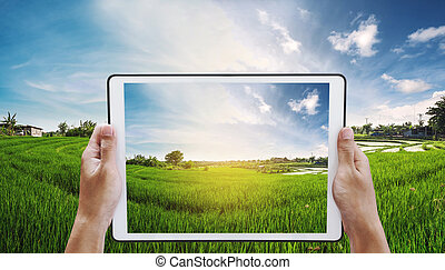 Digital tablet in hand with meadow