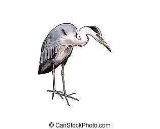 Digital toon illustration of a Grey heron isolated
