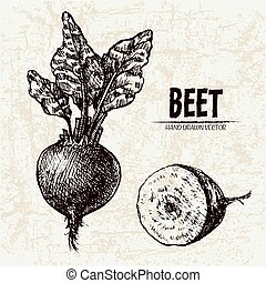 Digital vector detailed line art beet