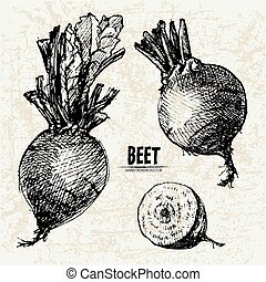 Digital vector detailed line art beet
