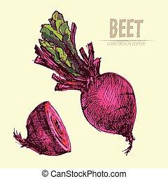 Digital vector detailed line art color beet