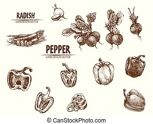 Digital vector detailed line art radish and pepper vegetable...