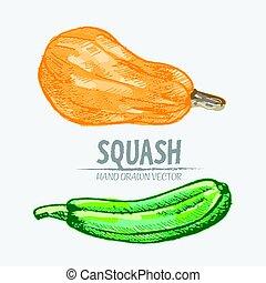Digital vector detailed squash hand drawn - Digital vector...