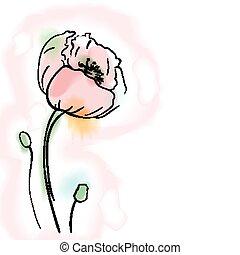 Digital watercolor vector flower, poppy.