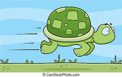 digiuno, tartaruga