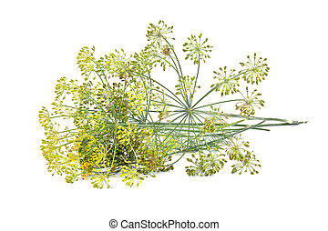 Dill - A plant is a dill, it is isolated on a white ...