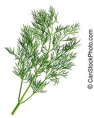 Dill green leaf closeup on white background