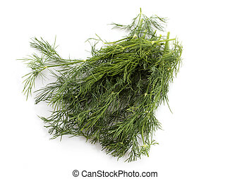 dill herb in front of white background