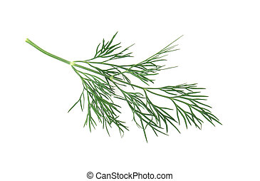 dill herb leaf close up macro isolated on white background