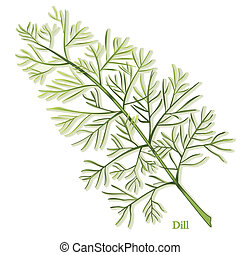 Thin, needle like aromatic leaves used to season foods and pickles. Also called Dill weed. See other herbs and spices in this series.