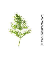 dill leaf isolated on white background