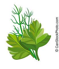 dill, parsley illustration