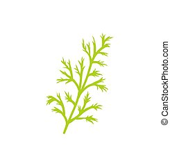Dill Species Herb Closeup Icon Vector Illustration