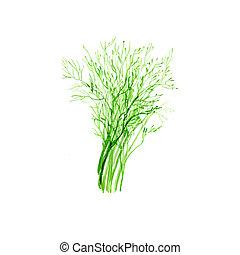 Dill - Watercolor Dill. Hand Drawn Illustration Organic Food...