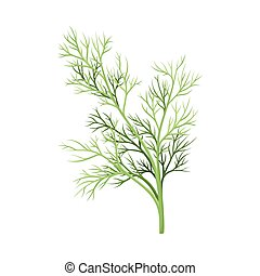 Dill Twig as Kitchen Herb for Cooking Vector Element
