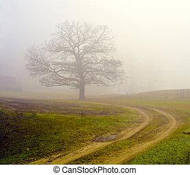dimmig, fält, av, a, träd.