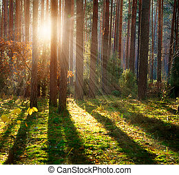 dimmig, gammal, forest., höst, veder