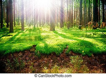 dimmig, gammal, skog