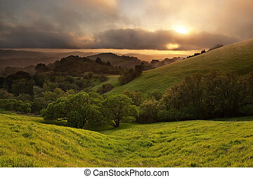 dimmig, kalifornien, äng, solnedgång