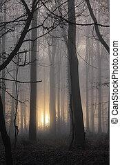 dimmig, morgon, skogig, stående