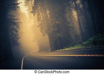 dimmig, skog, väg