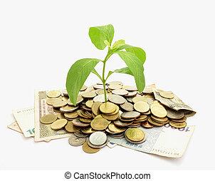 dinero, concepción, crecer, en, moneda, pila