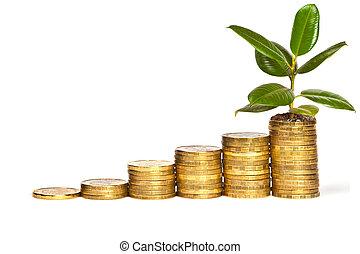 dinero, crecimiento