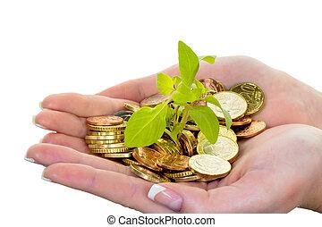 dinero, y, plant., símbolo, foto, excepto