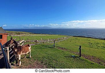 dingle peninsula - view of ireland