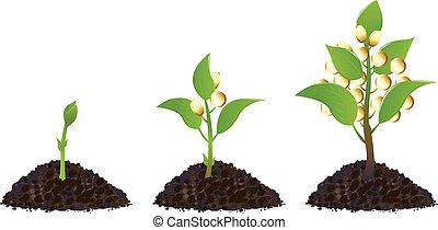 dinheiro, plantas, vida, processo