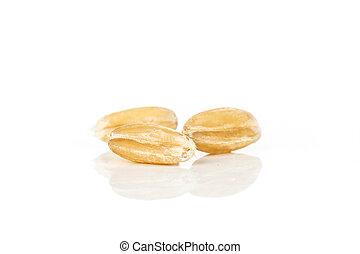 Group of three whole fresh beige dinkel wheat grain macro isolated on white background