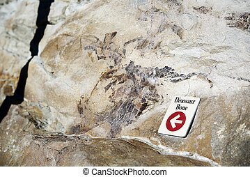 Dinosaur Bone Fossil. Morrison Fossil Area National Natural...
