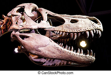 Tyrannosaurus rex - Dinosaur skull - Tyrannosaurus rex