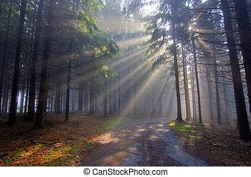 dio, raggi, -, conifero, foresta, in, nebbia