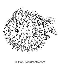 diodon, blowfish, sketh, ilustración, holocanthus., o
