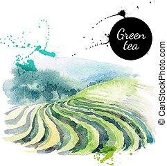 dipinto, tè, illustrazione, mano, acquarello, vettore, ...