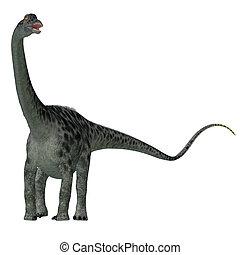 Diplodocus Dinosaur Tail