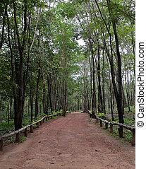 Dipterocarp forest, Thailand - Trail through dipterocarp ...
