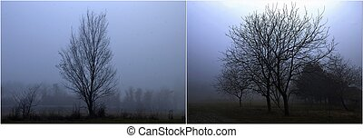 Diptych of trees on fogy day