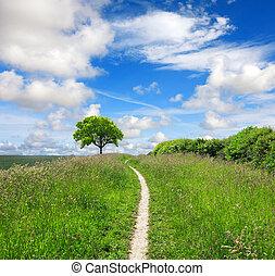 direção, natureza