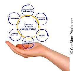 dirección, capital humano