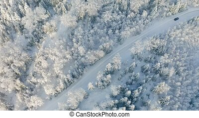 Directly above large forest and driving car on road in the...
