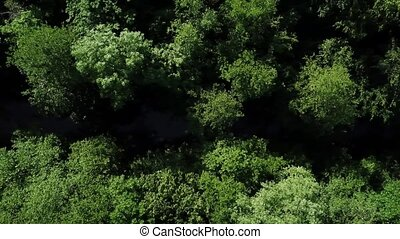 Directly above view of densely growing trees, between which...