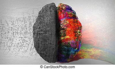 direita, criatividade, -, /, cérebro, human, lógica, lado, vs., esquerda