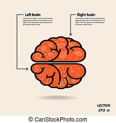 direita, símbolo, cérebro, símbolo, sinal, esquerda,...
