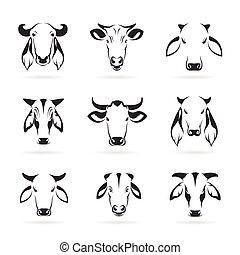 dirigere insieme, mucca, vettore, fondo, bianco